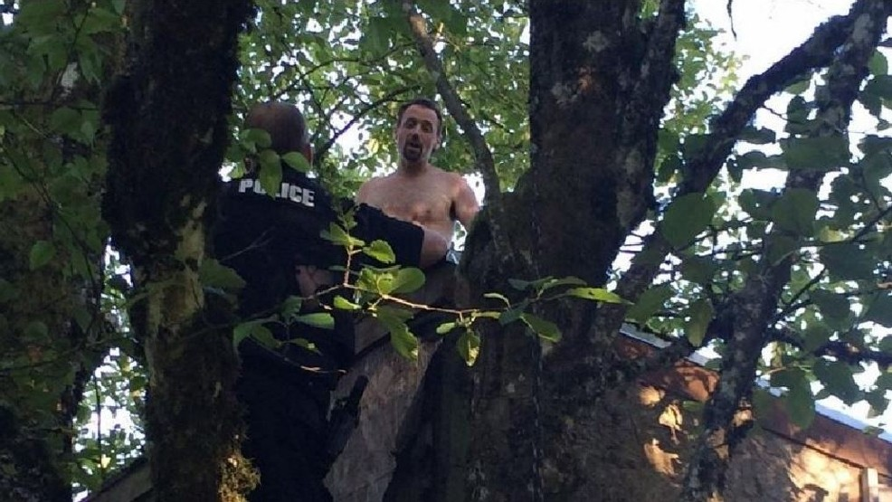 Sheriff: Man high on meth climbs into treehouse, comes down