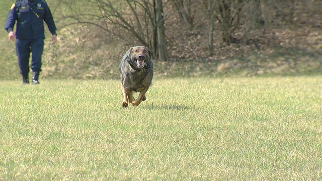 First Pause for our Paws event raises money for K-9 units | WKRC